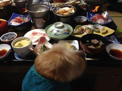 那須塩原に行ってきました!愛犬と紅葉&温泉旅行~お部屋編~