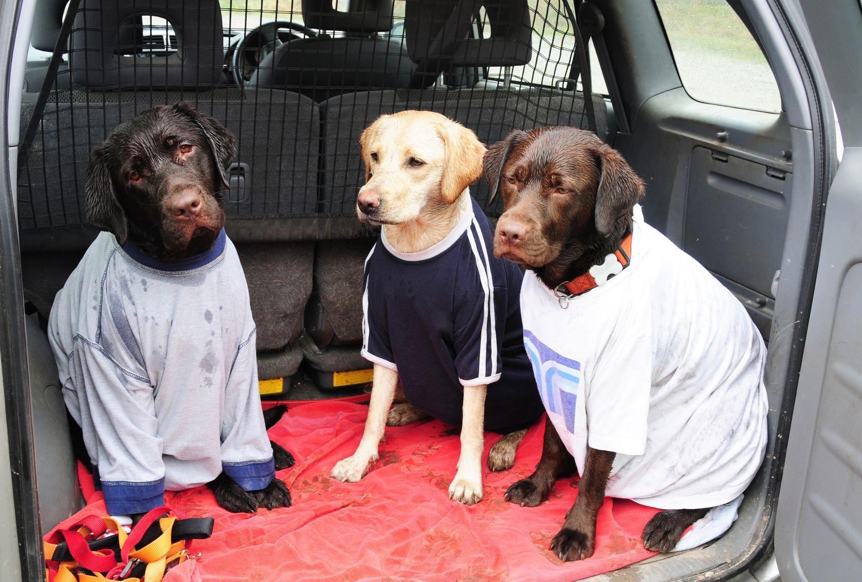 愛犬とのドライブで用意しておきたい、車の汚れ予防グッズとは?