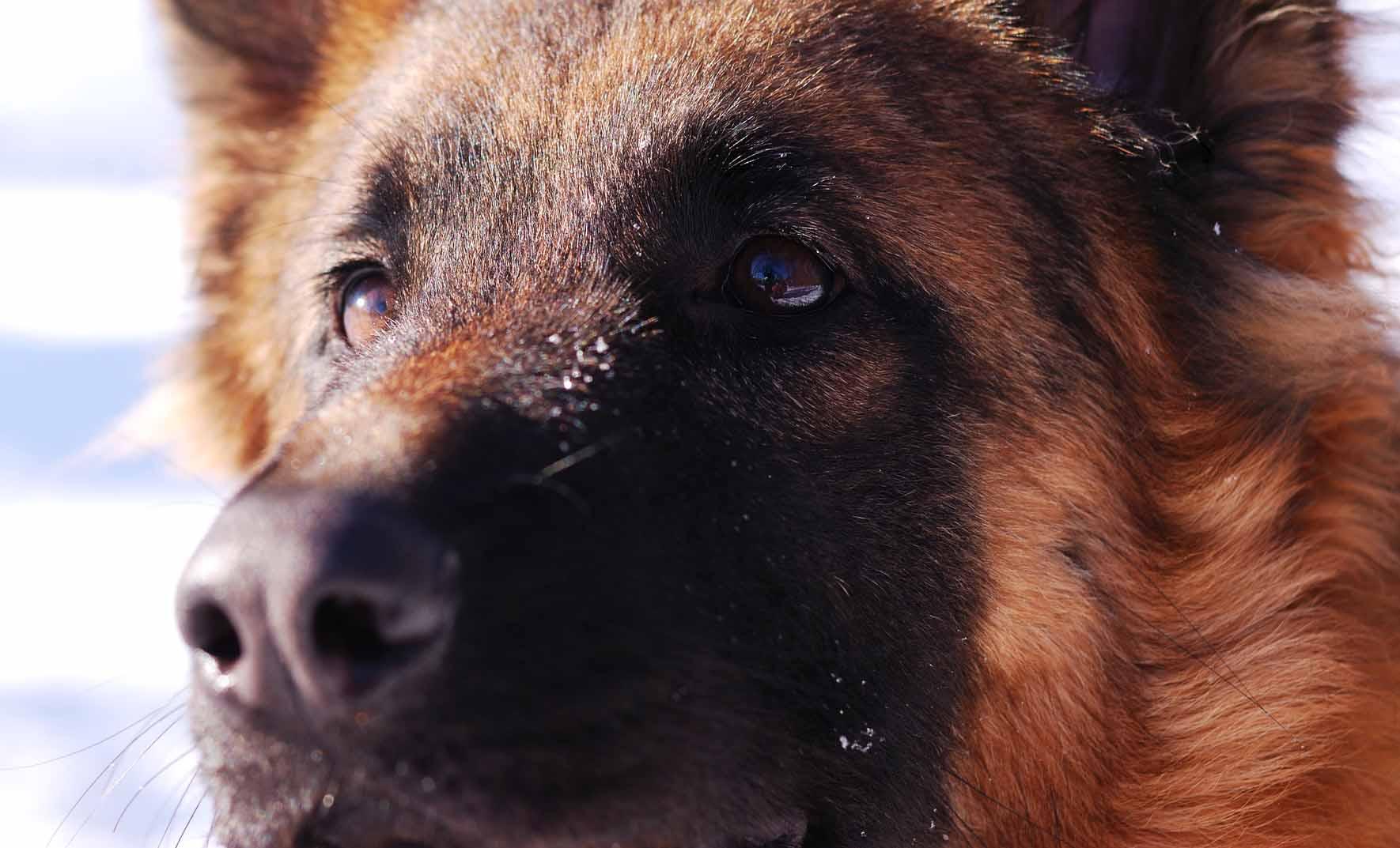 人の命も救う嗅覚!英国で実用も近い、犬によるガン検査