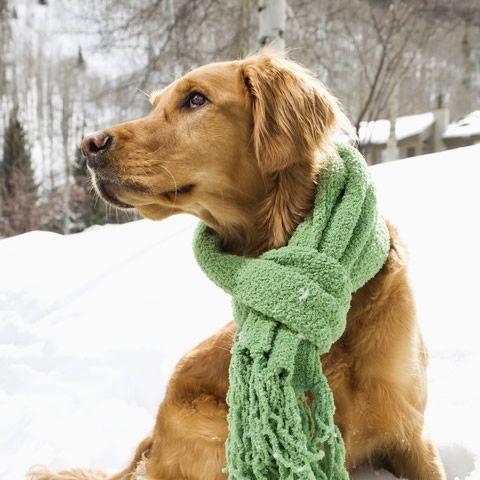 愛犬の冬に向けて おすすめの寒さ対策グッズ