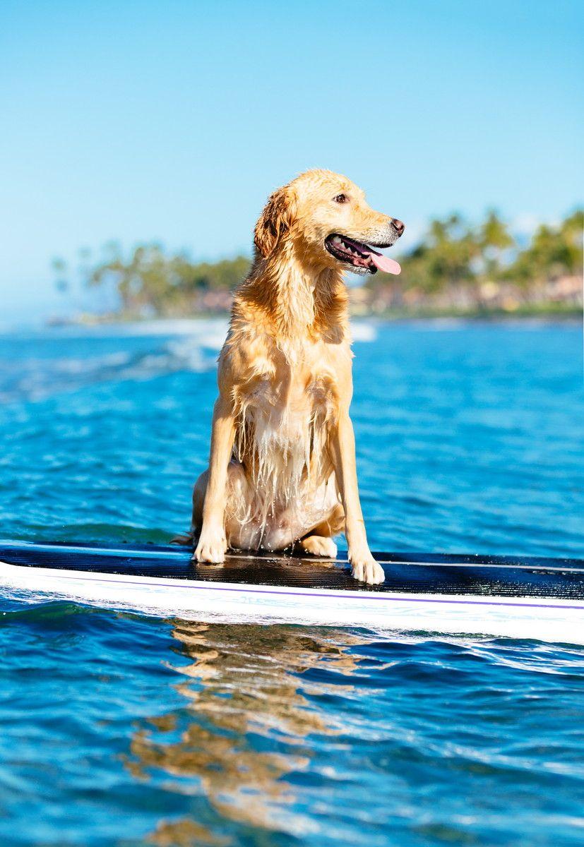 海と自然にワンちゃんも大満足♪沖縄のリゾートホテル5選
