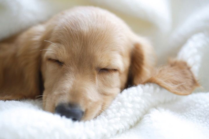 ぽかぽか嬉しいワン!愛犬のための「寒さ対策」&注意点