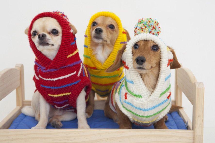 愛犬のための寒さ対策!元気で快適な冬の過ごし方