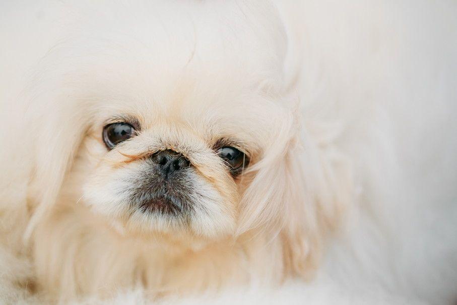 スマホで愛犬を可愛く撮りたい!どうすればカメラ目線になる!?すぐにできるフォトテクニック