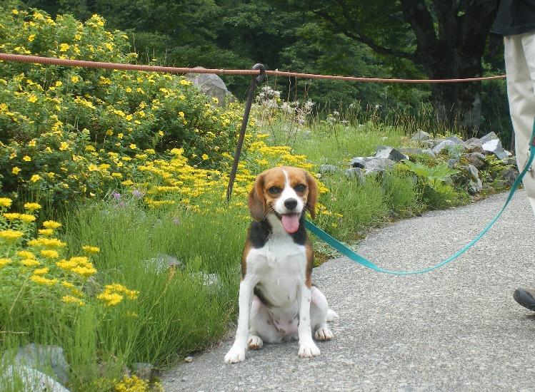 天空のお花畑♪アルプの里を愛犬と訪ねてみました<新潟県・南魚沼郡>