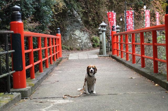 愛犬も一緒!美しい紅葉を奏でる大山登山<神奈川県伊勢原市>