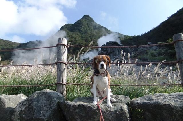 愛犬も一緒にロープウェイで行く箱根観光♪<神奈川県箱根町>