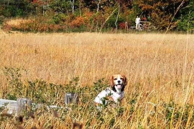 愛犬とたくみの里&リンゴ狩り&玉原ハイキング<群馬県利根郡・沼田>