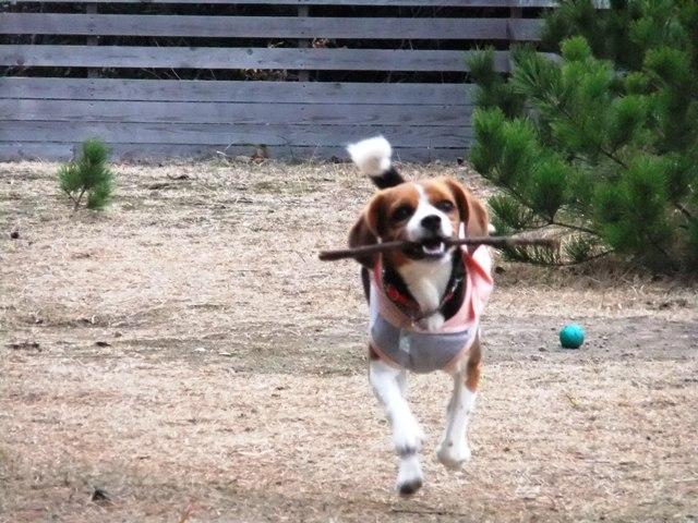 伊豆旅行~愛犬家に人気の宿ランキング上位「仔犬のワルツ」~<静岡県・河津>