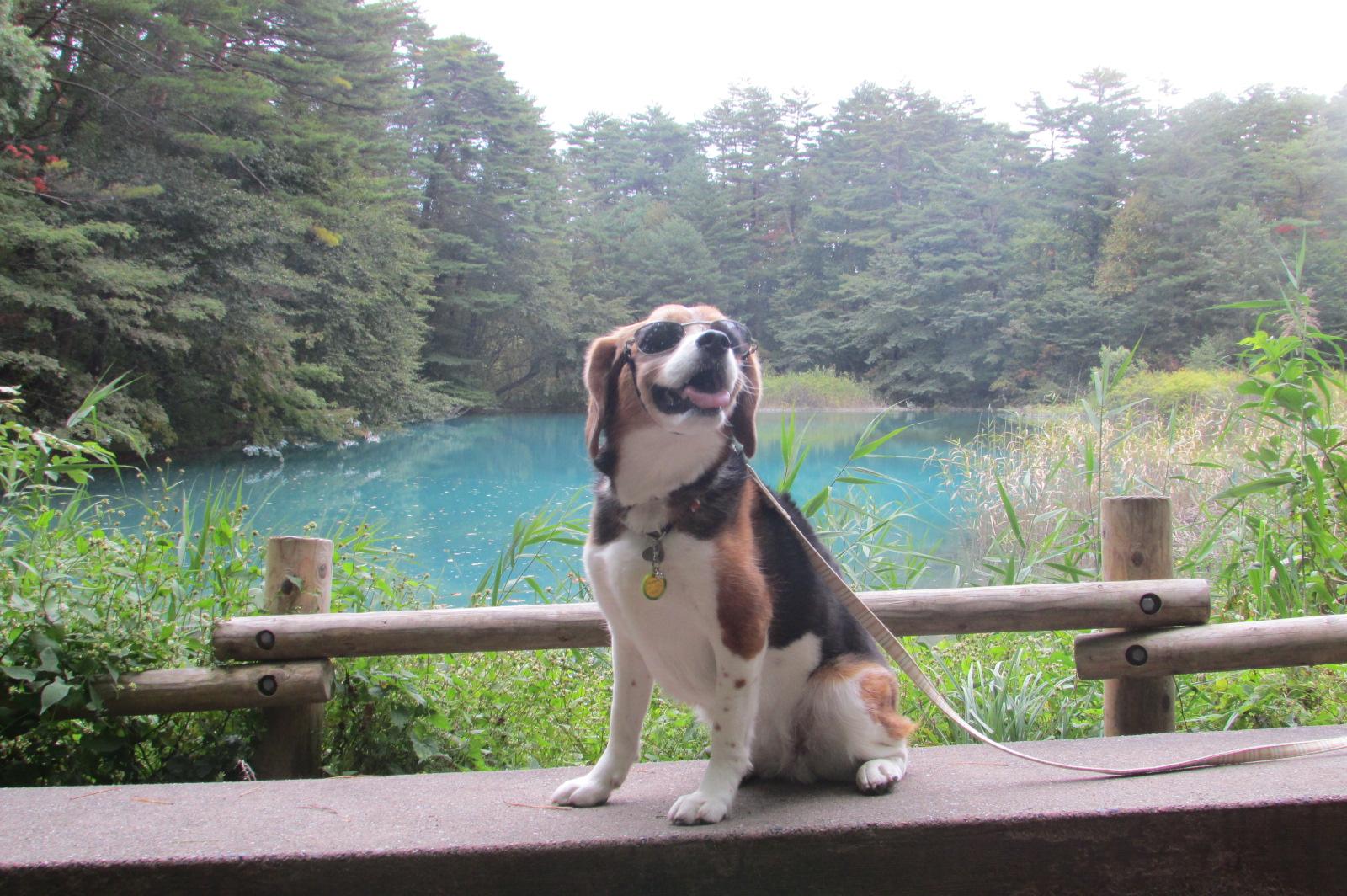 愛犬も一緒!みんなでワイワイ福島&那須旅行<福島県>