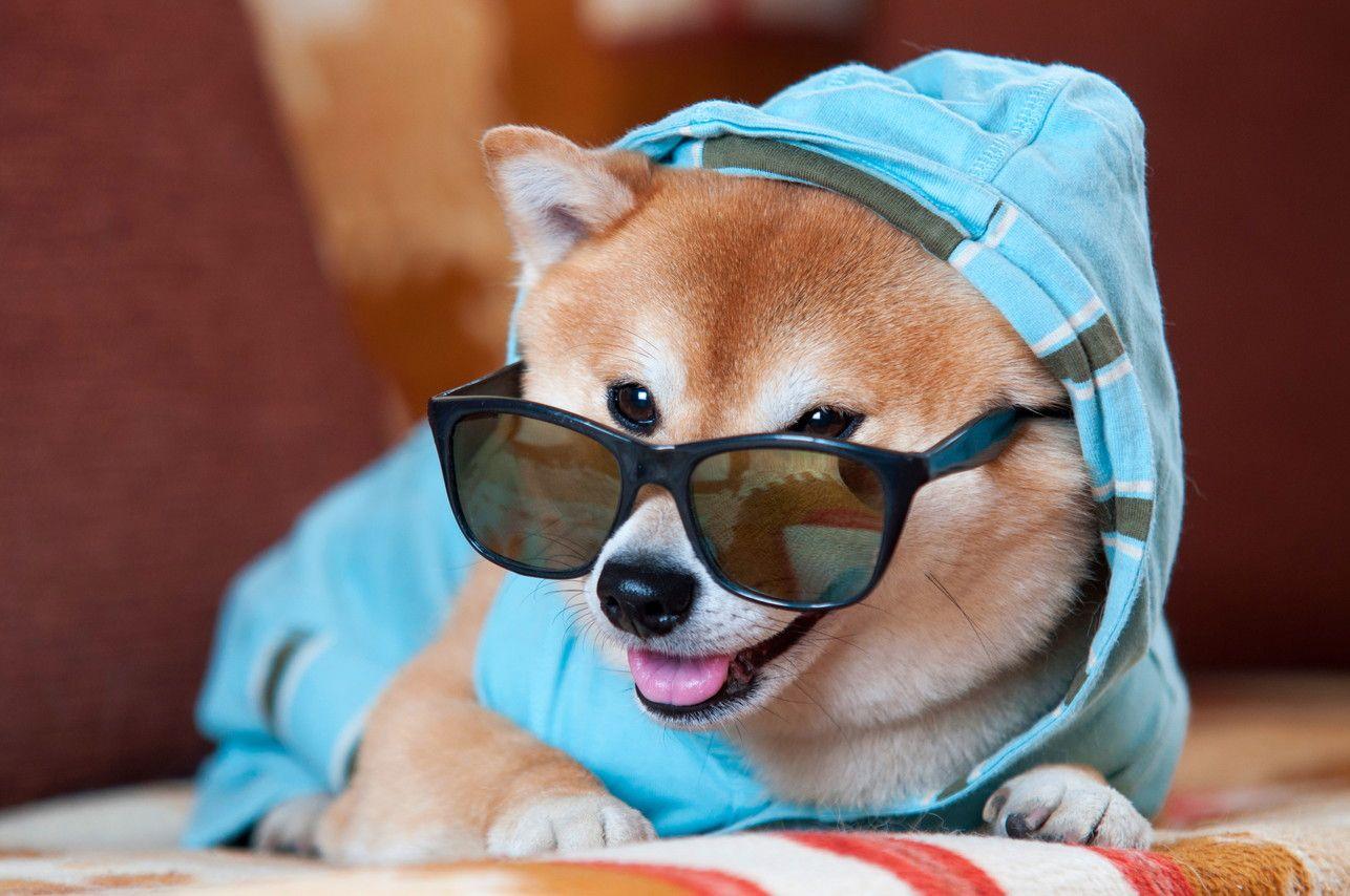 日本犬と言えばこれ!柴犬の魅力から飼い方まで