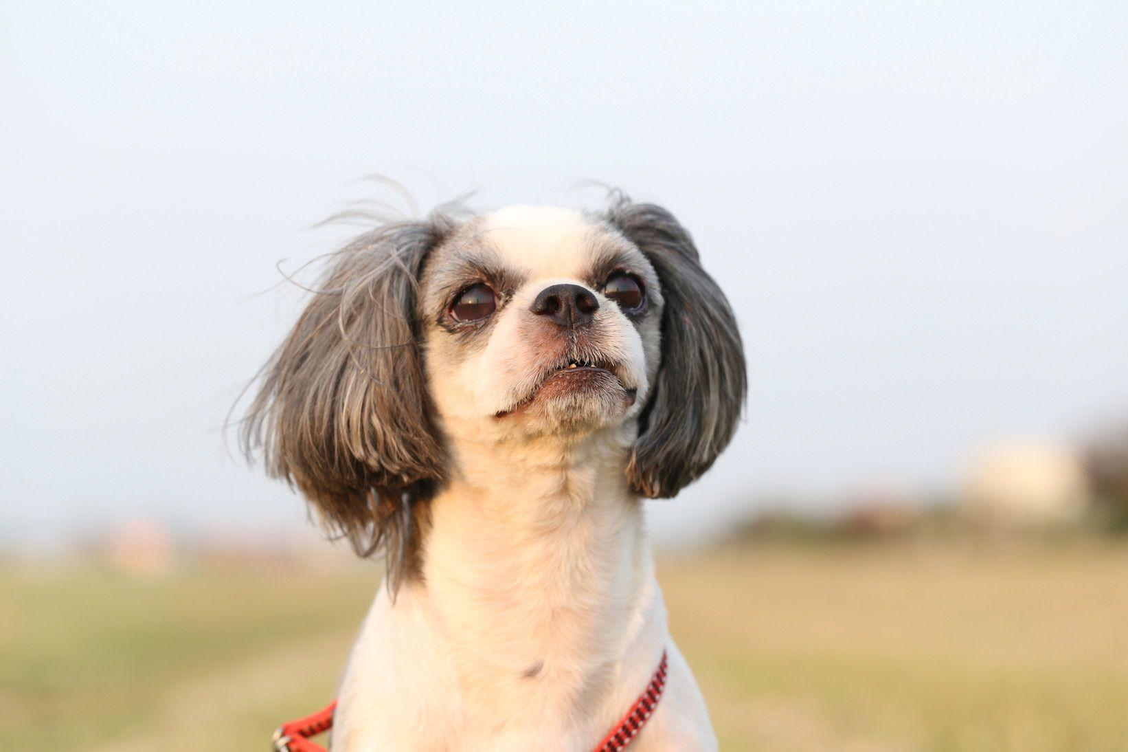 スマホでも簡単。愛犬をかわいく撮れちゃうフォトテクニック -リラックスさせようー