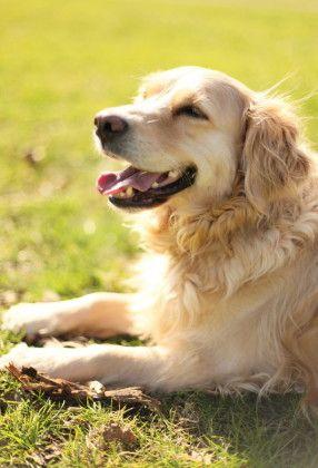 明るさを意識すれば、スマホでも愛犬を可愛く撮れる!写真撮影テクニック