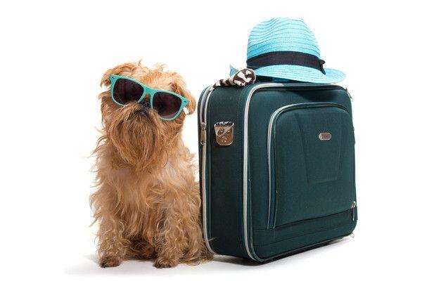 どんなことに気をつけるべき!?旅行時の愛犬の体調管理とトラブル予防