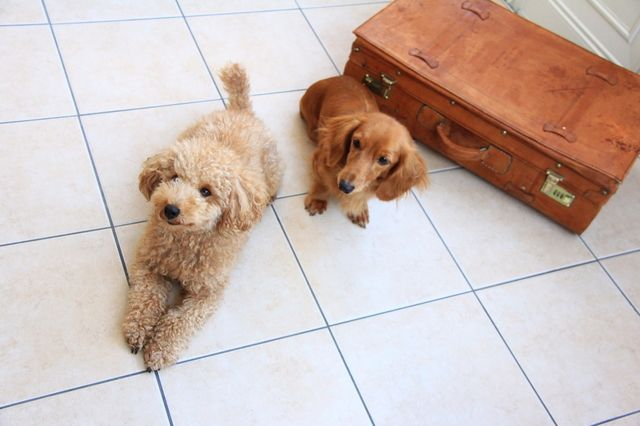 愛犬と初めての旅行を満喫!これだけあれば安心の持ち物チェックリスト