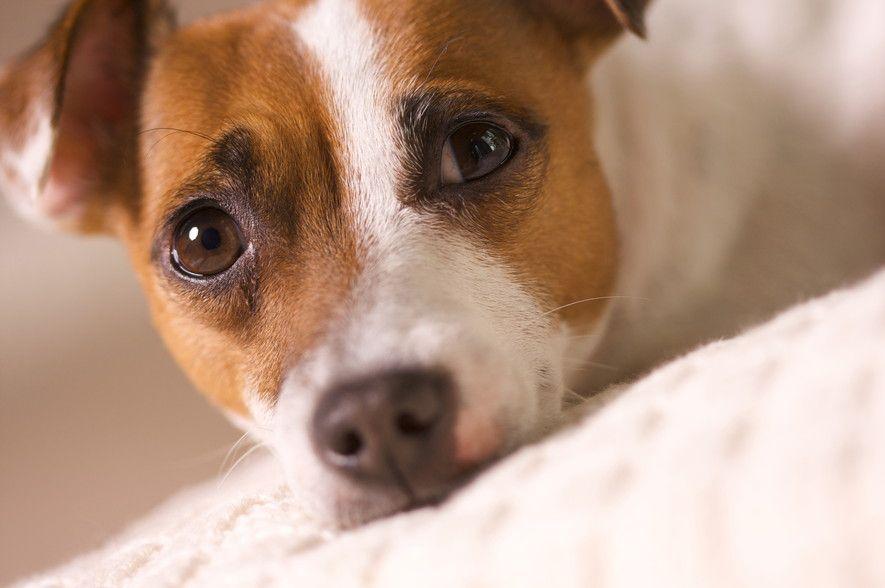 知っておきたい!ペット保険に入るタイミングっていつがいいの?