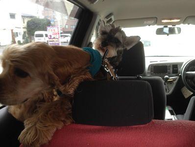 那須塩原に行ってきました!我が家の愛犬たちと紅葉&温泉旅行 ~出発編~