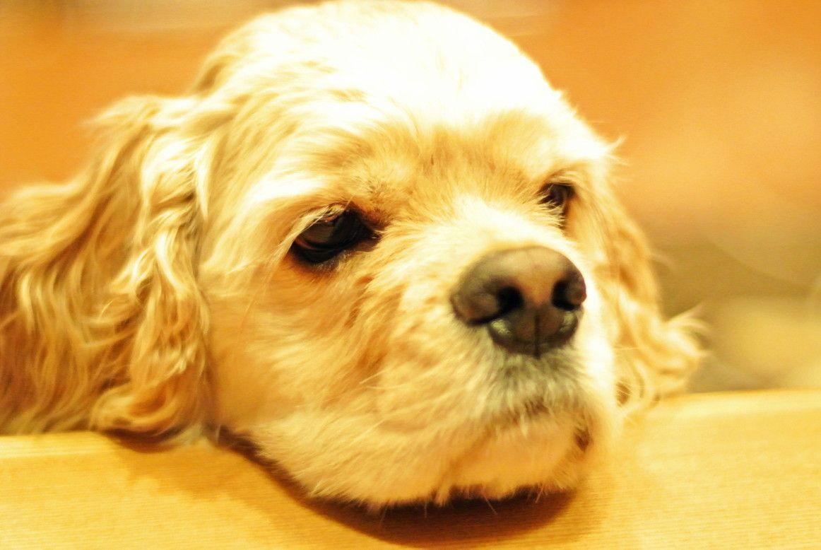 わんちゃんとの旅行 犬と一緒に泊まれる宿選び 3つのポイント