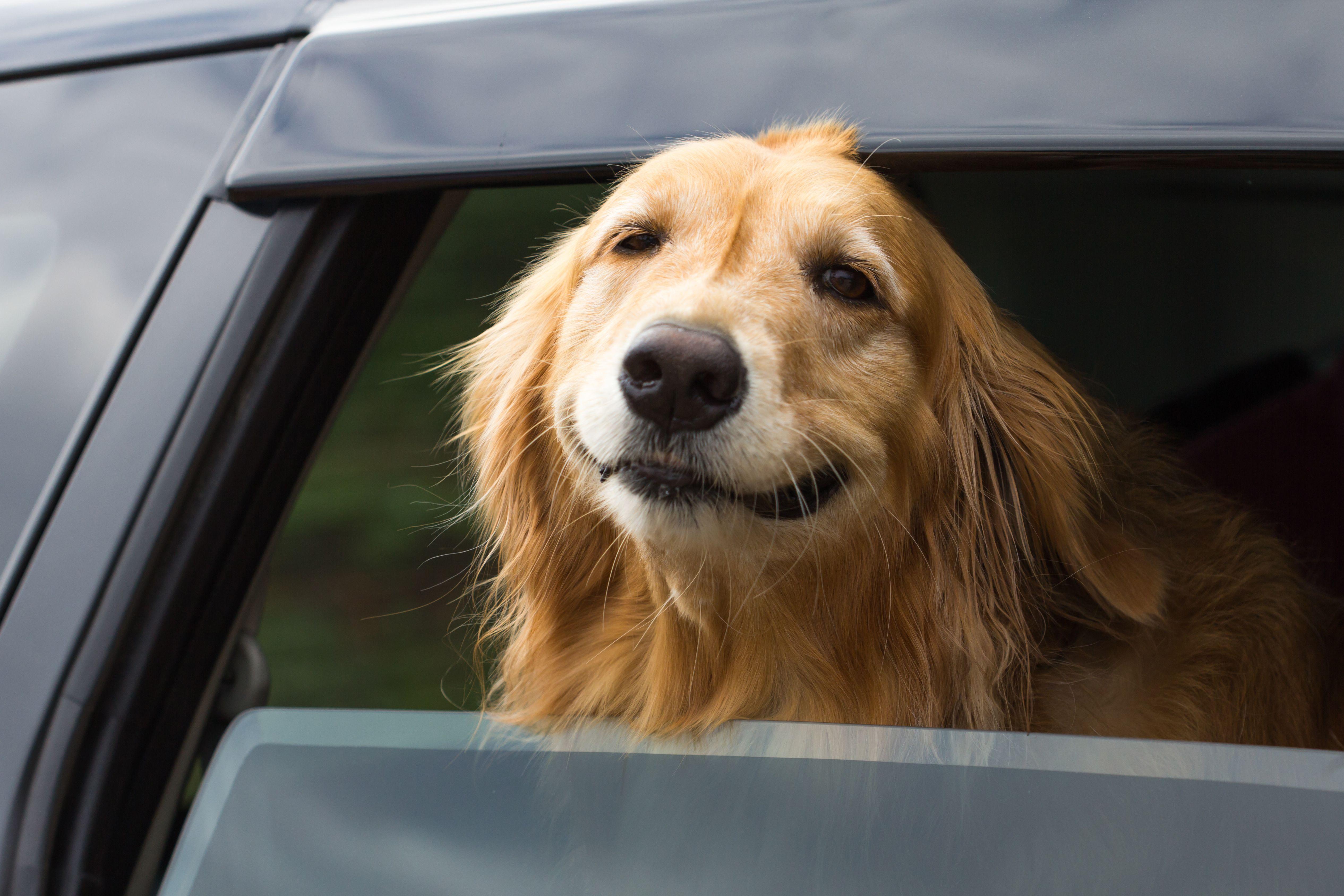 愛犬をのせたドライブで気をつけたいこと