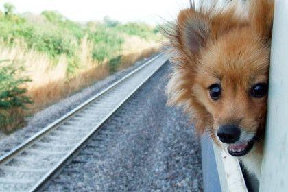 愛犬ともっと遠くへ出かけよう!知っておきたい電車でのマナー