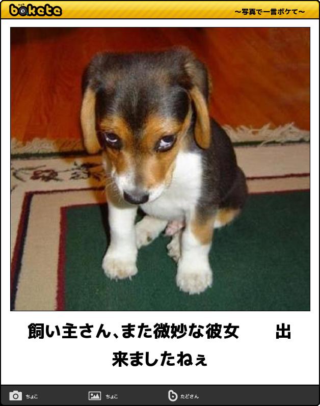 【ボケて】厳選 毒づいた感が憎オモロカワイイ 犬ボケて 7選