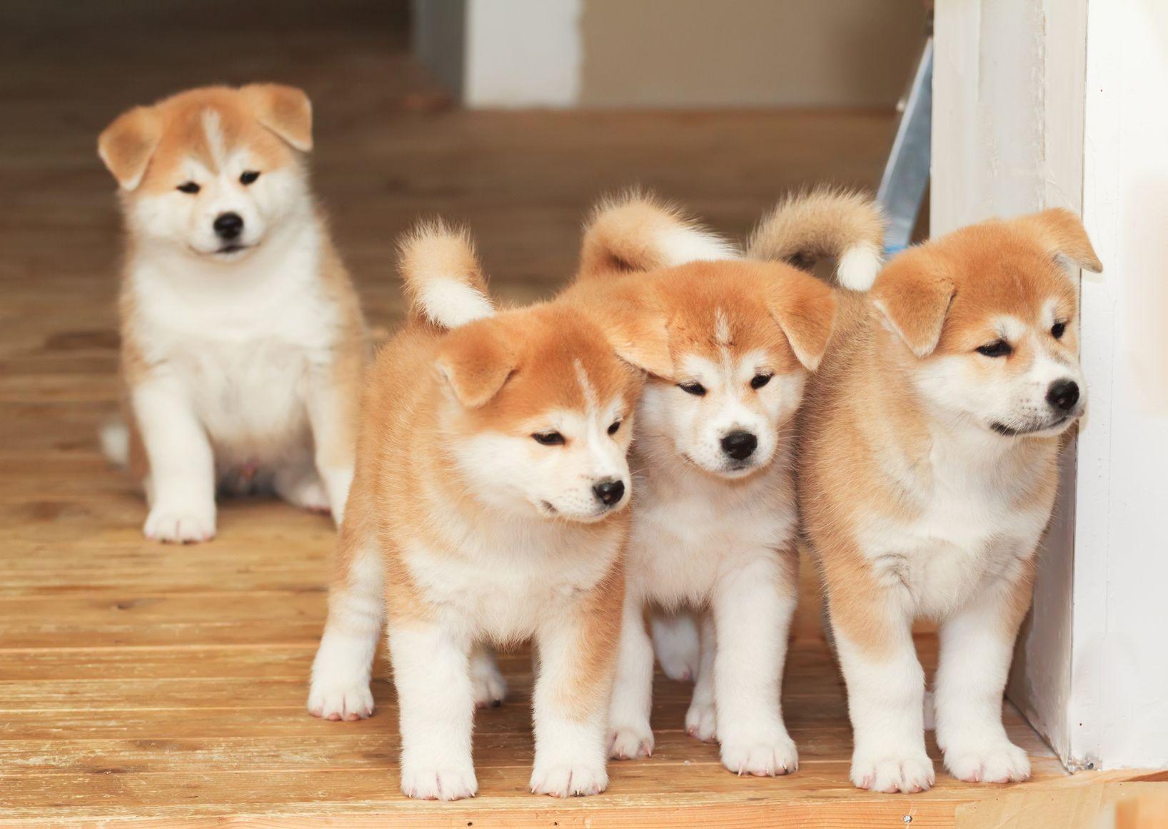 多頭飼いの皆さま必見!賢いペット保険の選び方