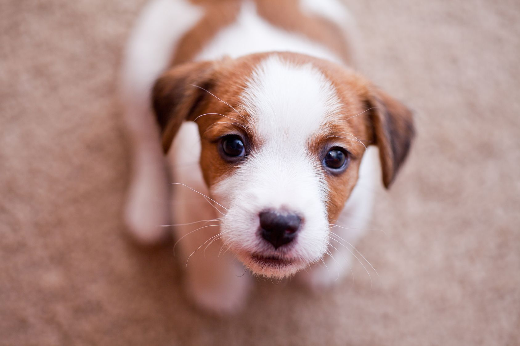スマホでも簡単!フォーカス調整と露出補正で愛犬の写真をワンランクアップ!