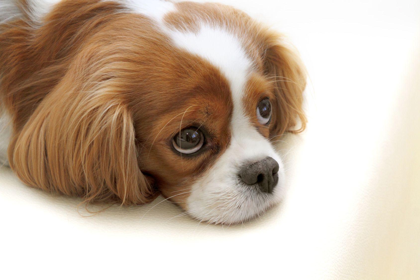 大切なペットのために入っておけば安心、ペット保険