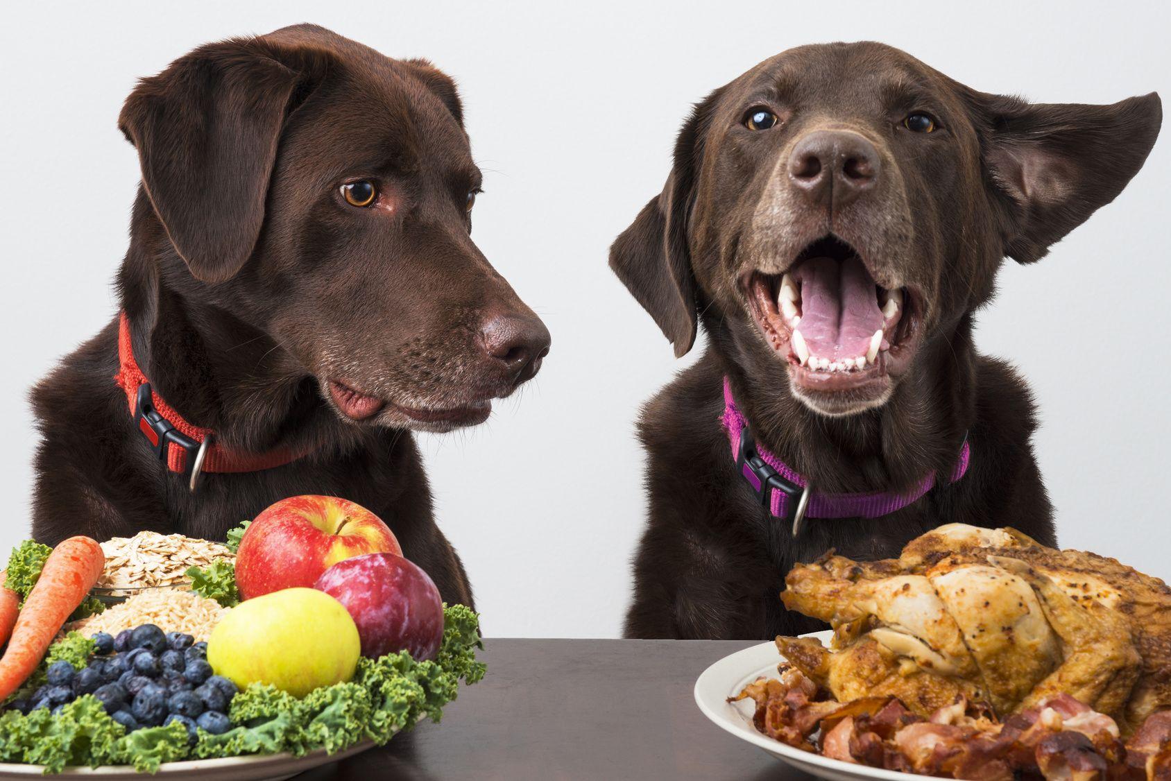 ちょっと待って! その食材大丈夫!? 愛犬にNGの食べ物は?