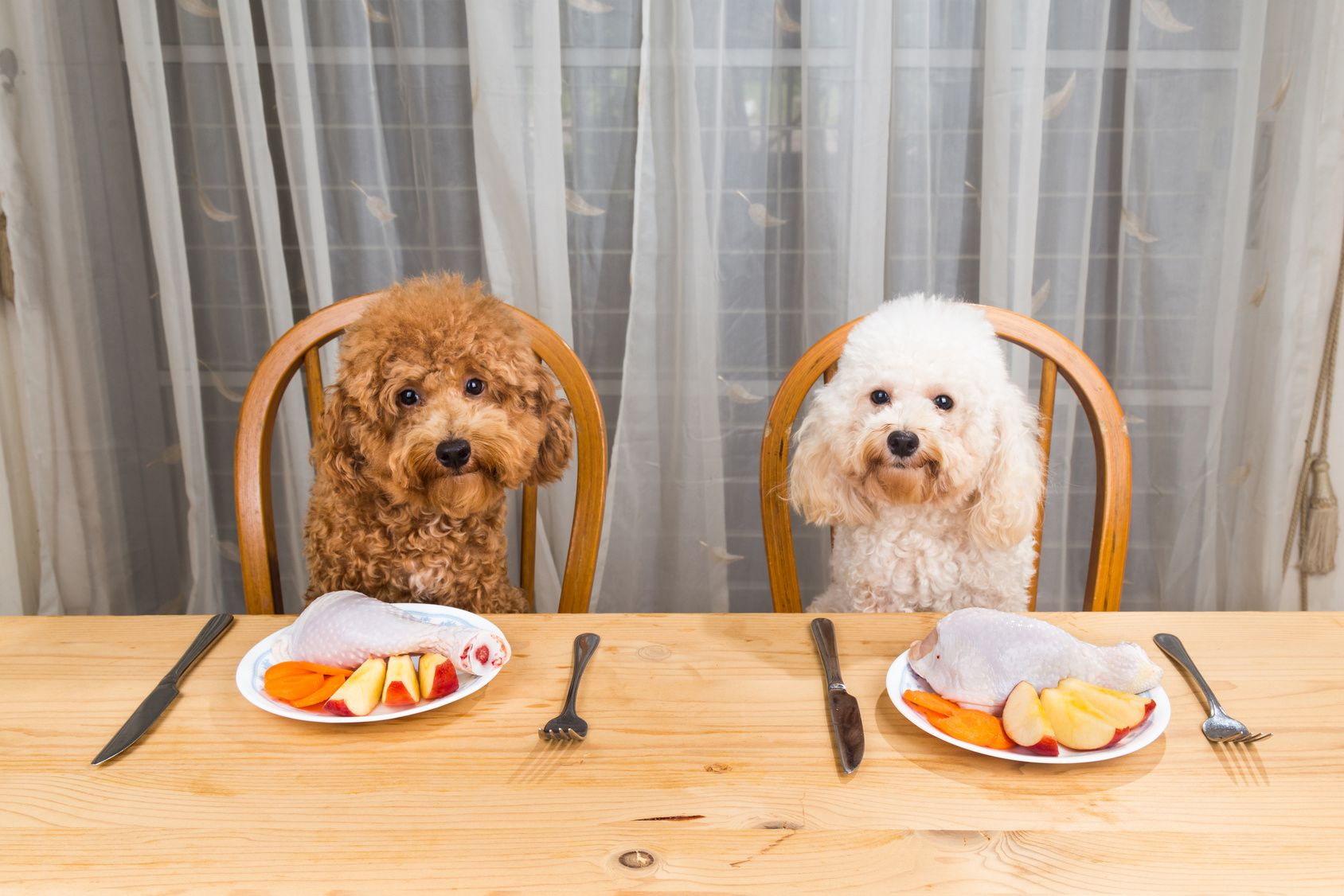Concept of excited dogs having delicious raw meat meal on table