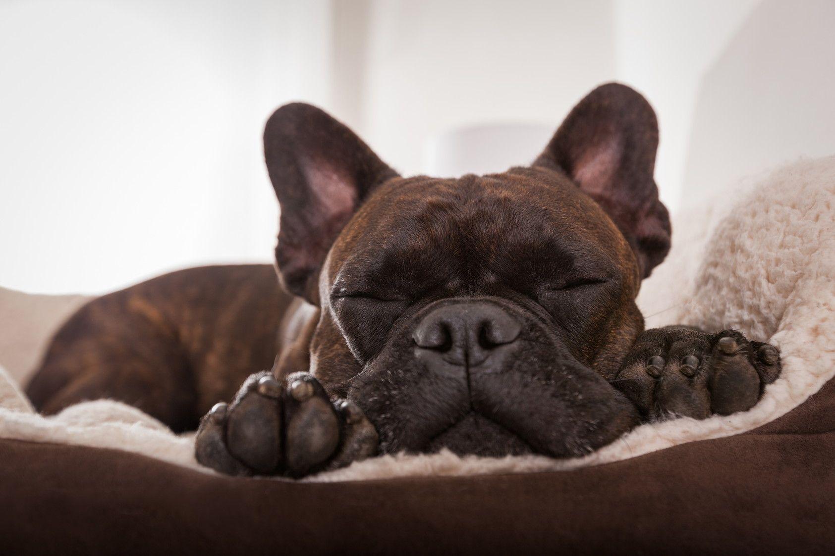 愛犬のためにとっておきのベッドを探そう!