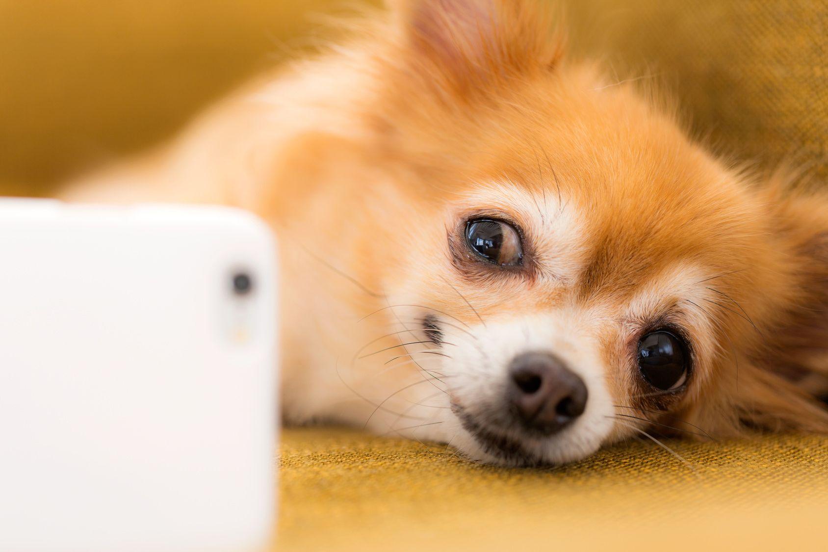 スマホで愛犬の本格写真が撮れるアプリ3選