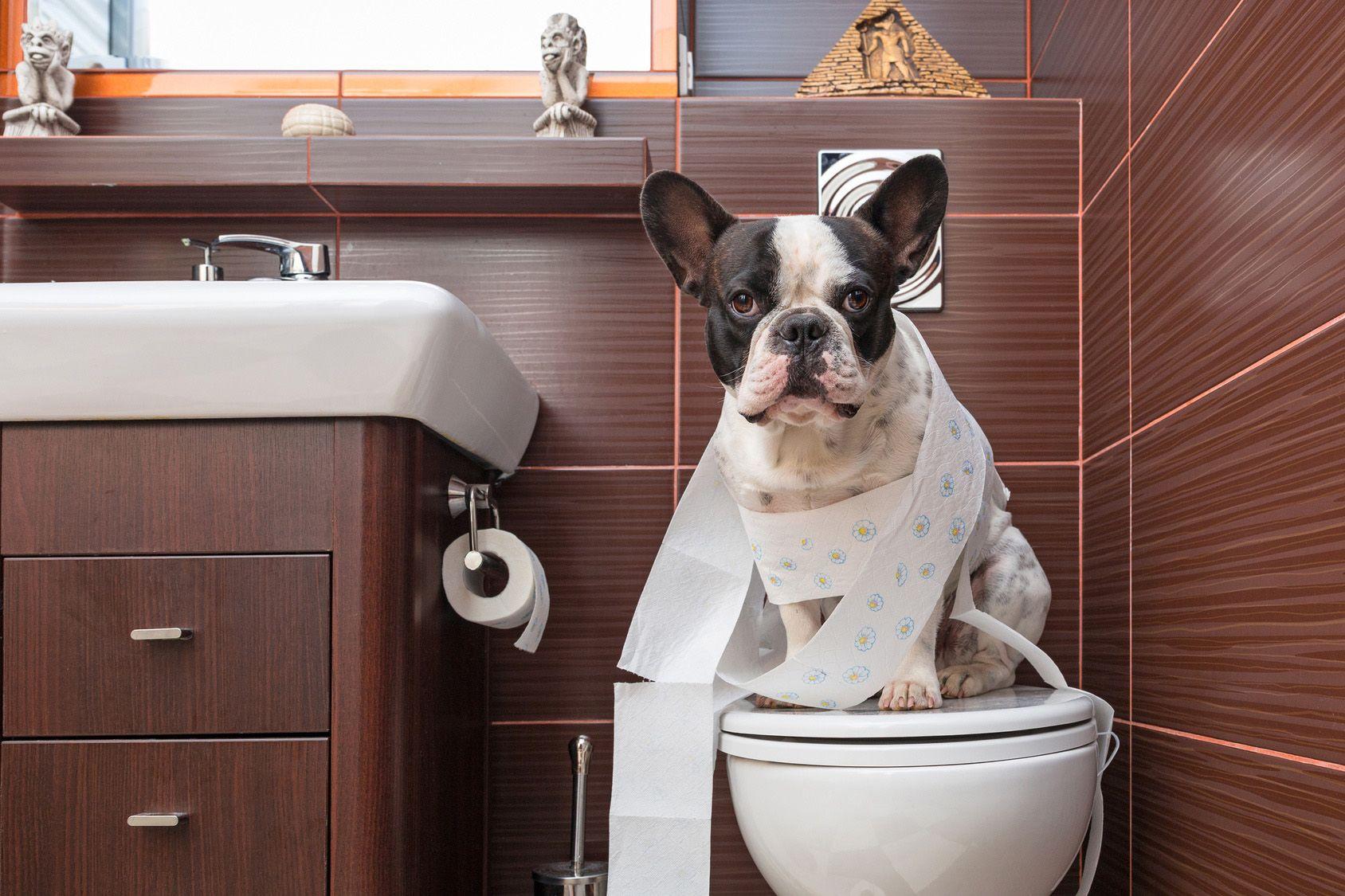 愛犬との旅行を楽しめるよう、「おトイレ」のしつけをマスターしよう!