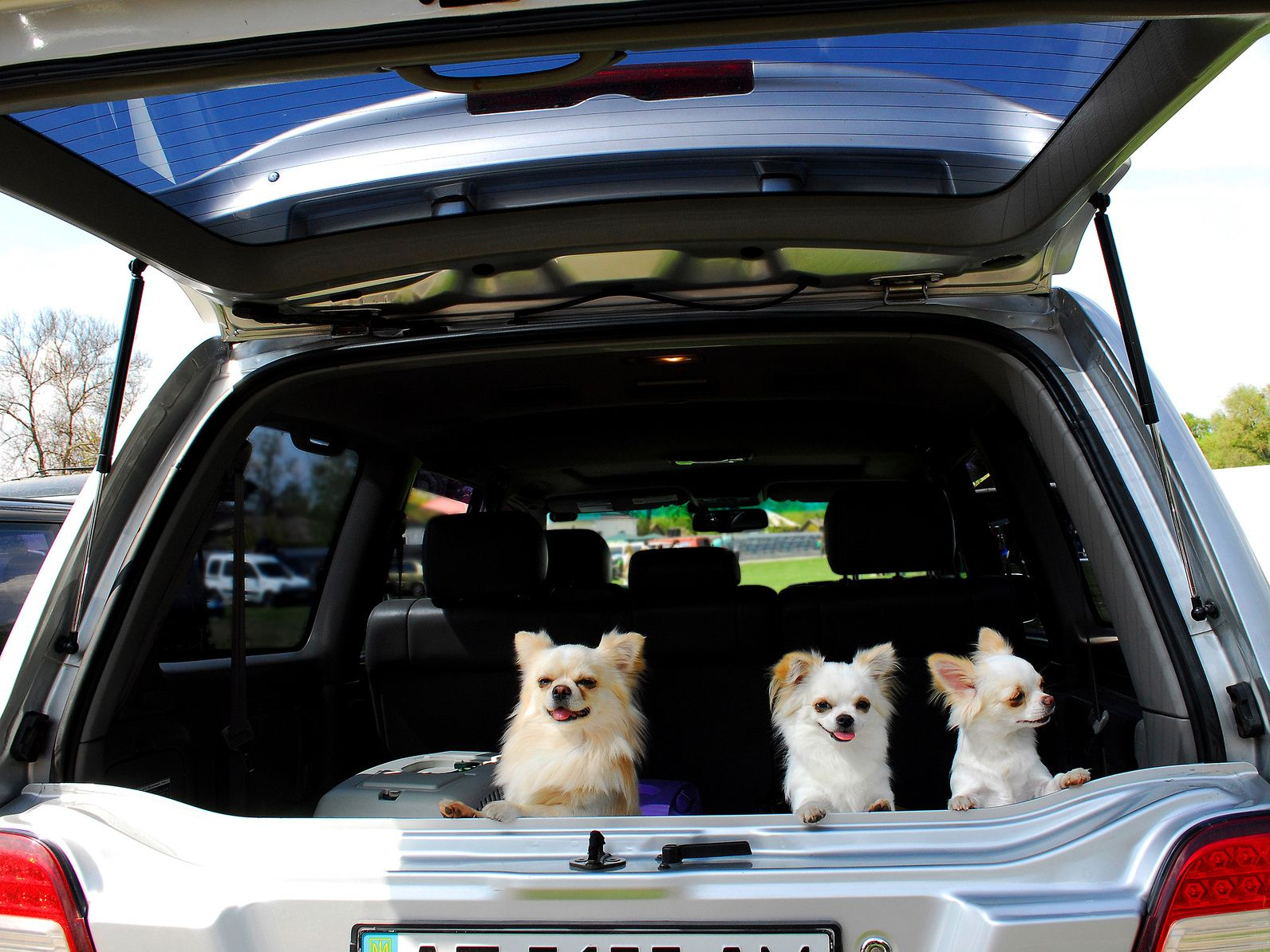 Three small doggies sit in the luggage rack of car.A luggage rack is open.Dogs peek out on a street.
