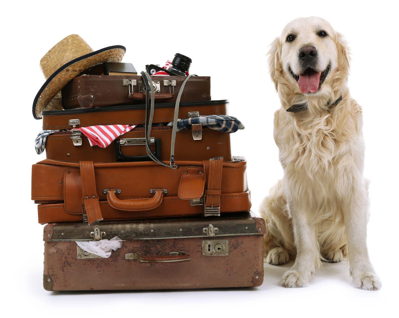 これがあれば大丈夫♪わんちゃんとの楽しい旅に備えたい持ち物とは?