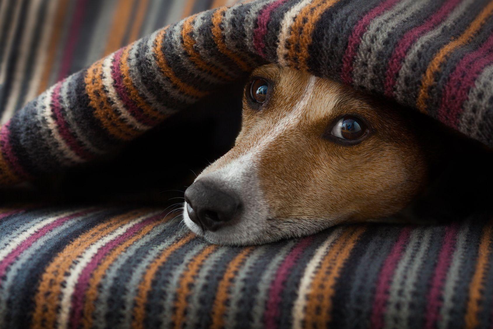 要注意!ペット保険が適用されない病気やケガとは?
