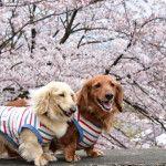 お花を見ながらのんびり散策♪東京近郊のお花見スポット