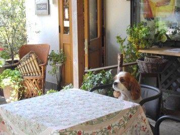 愛犬と一緒に温泉旅行へ!箱根・湯河原エリアで愛犬と過ごせるドッグカフェ4選