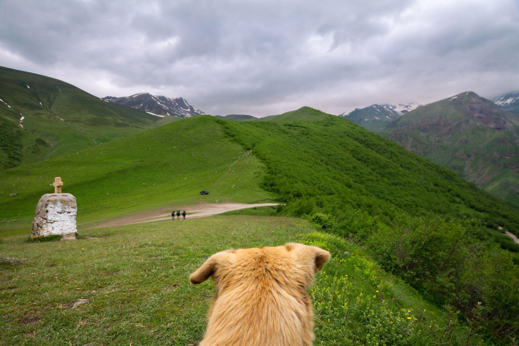 愛犬とトレッキング!安全に楽しむためのポイント