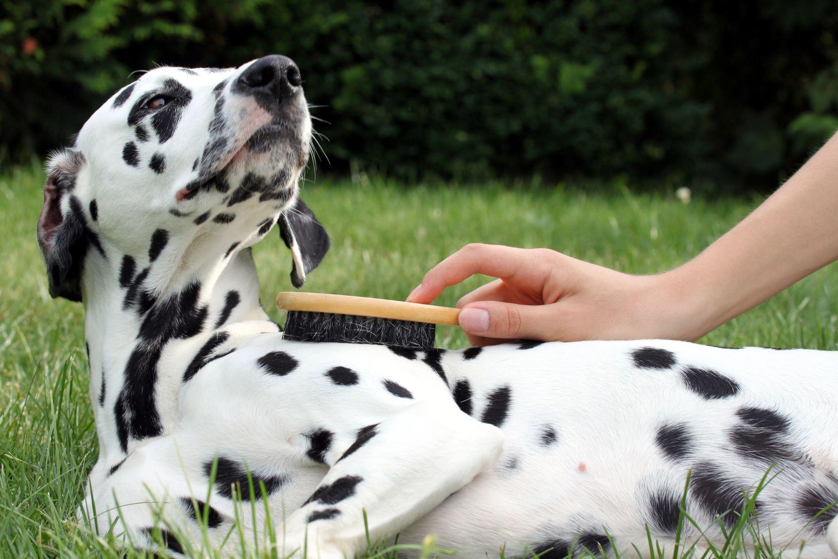 Hund geniet die Fellpflege mit Brste drauen