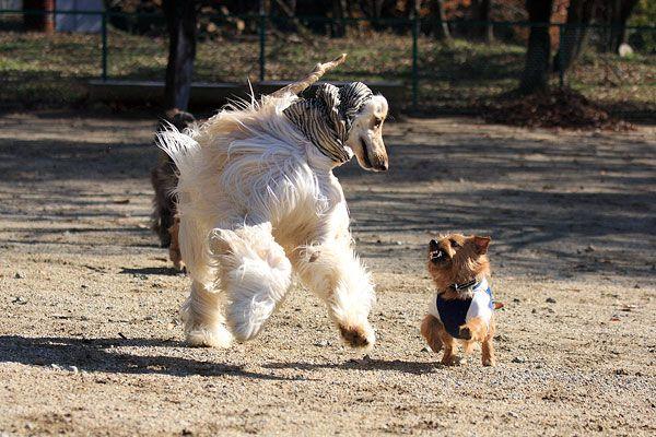 愛犬同伴にもぴったり!癒しの看板犬がいる那須の宿5選
