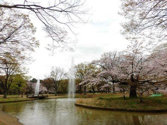 ワンちゃんが大好きなお散歩やピクニック♪東京のおすすめ5スポット!