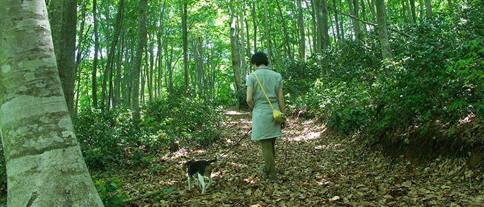 長野でワンちゃんとお散歩やピクニックに行くならどこがいい?おすすめスポット5選
