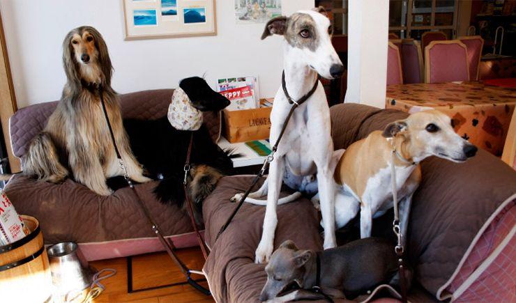 山梨で見つける!看板犬のいるお宿を紹介!