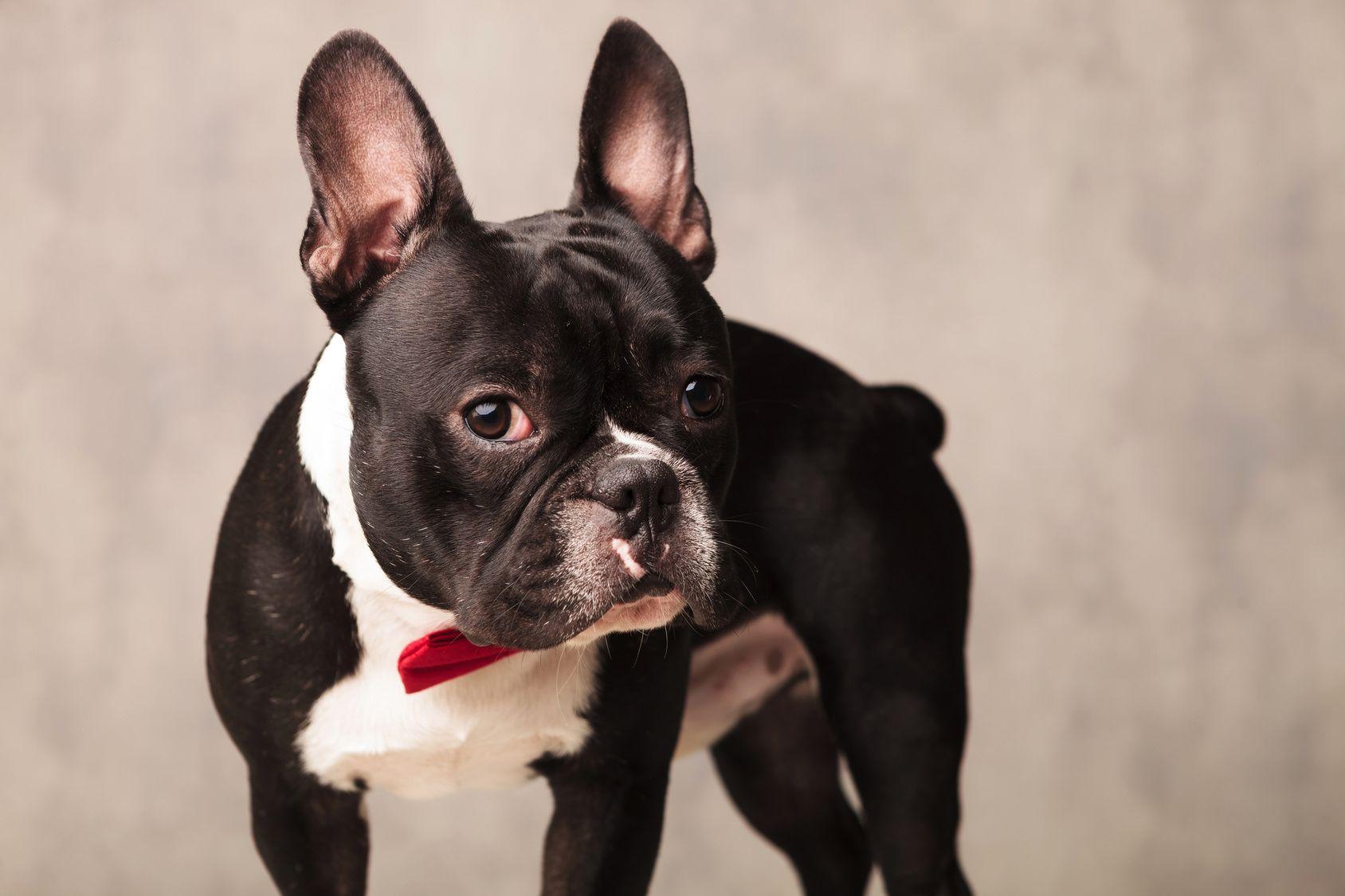 愛犬との写真を残そう!大阪の人気フォトスタジオ5選