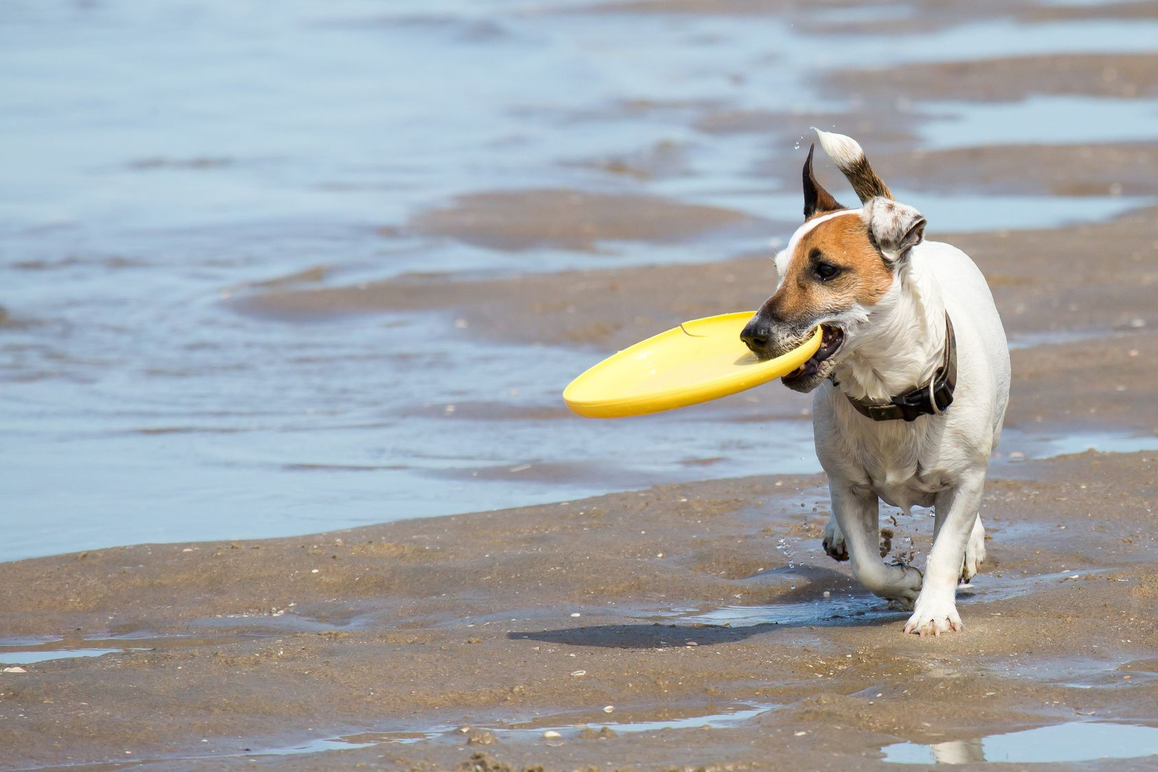 ワンちゃんも一緒にビーチへGO♪関西のペット可ビーチ5選