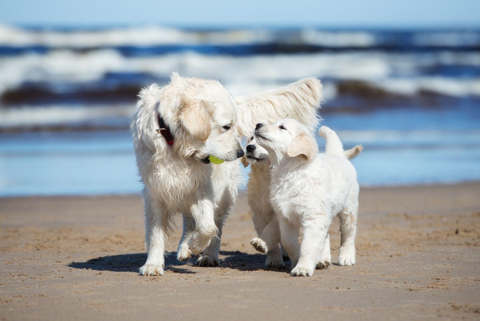次の週末に訪れたい!ワンちゃんと楽しめる関東のビーチはココ!