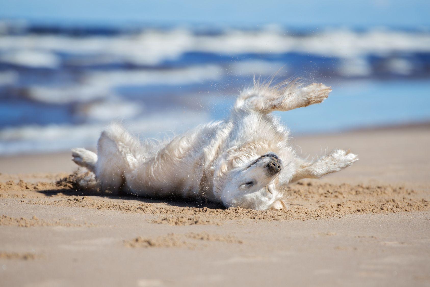 わんちゃんだって海が見たい!ペットと過ごせる東海地方のビーチ7選