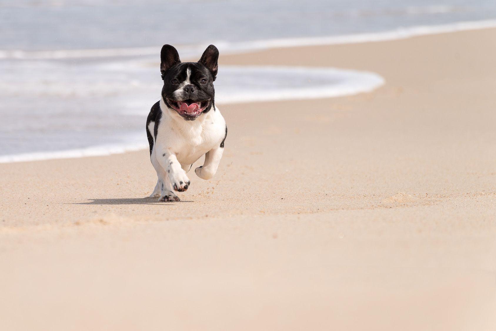 沖縄でワンちゃんと過ごす!行ってみたいビーチはココ!