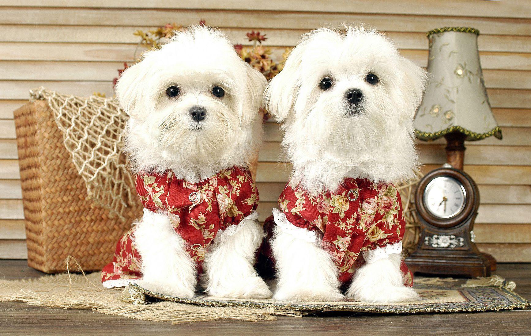 愛犬と一緒に写真を撮ろう!人気のペットスタジオ5選【福岡県】